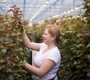 Как всё устроено: розарий – три гектара вечного лета