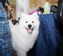 В Туле прошли одновременно четыре выставки собак