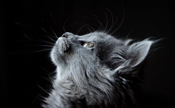 Товары для животных по доступным ценам и тульские ветклиники, которым можно доверять: обзор Myslo