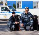 Хвостатый патруль: доберман Эльза и лабрадор Гром стали лучшими на соревнованиях «Кинолог XXI века»