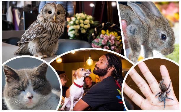 Сова в ритуалке, кот в суде и паук в баре: в тульских организациях живут необычные «работники»