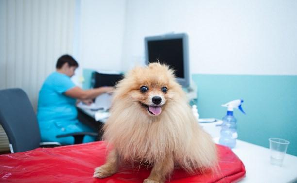 Ветеринарная клиника Vetera: «Здоровье ваших питомцев – наша работа»