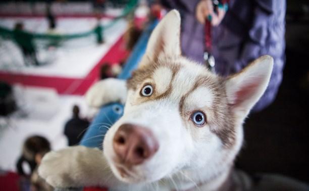 Милые шпицы, красавцы хаски и важные доги: В Туле прошла выставка собак