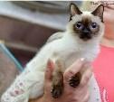 Тулячка восстанавливает редкий вид кошек