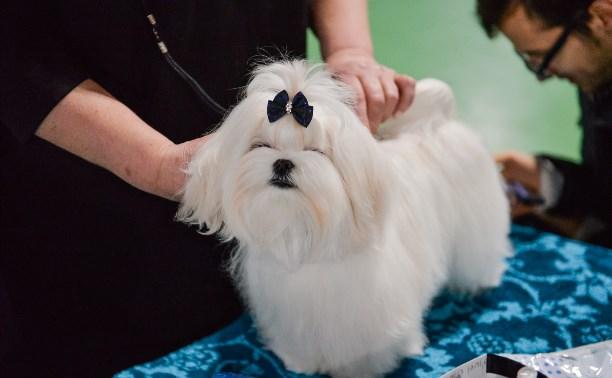 110 самых милых фотографий с выставки собак в Туле