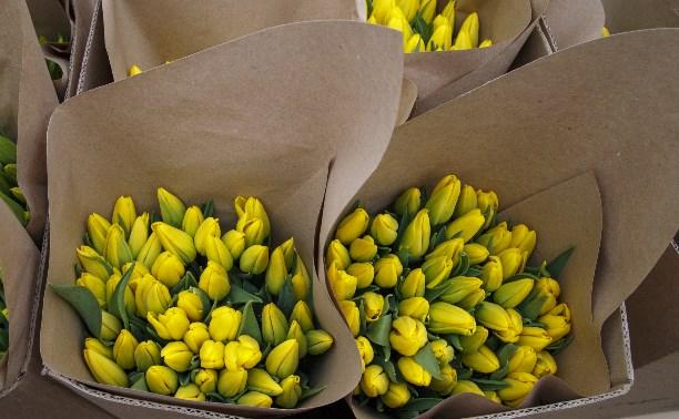 Репортаж: Как выращивают тюльпаны в Тульской области