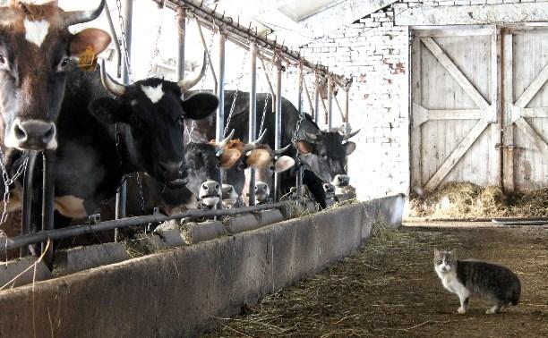 Сколько стоит молоко на ферме?