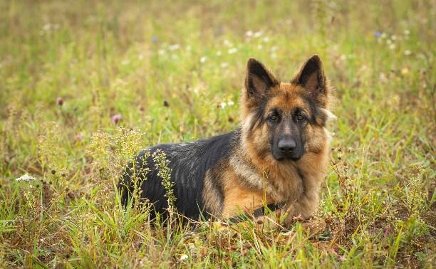 В Тульской области выбрали лучших собак России