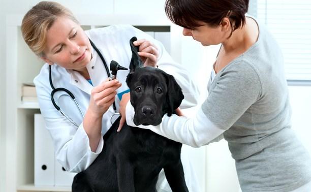 В какой ветеринарной клинике лечить своего питомца