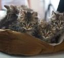 На выставку в Тулу приехали самые лучшие кошки