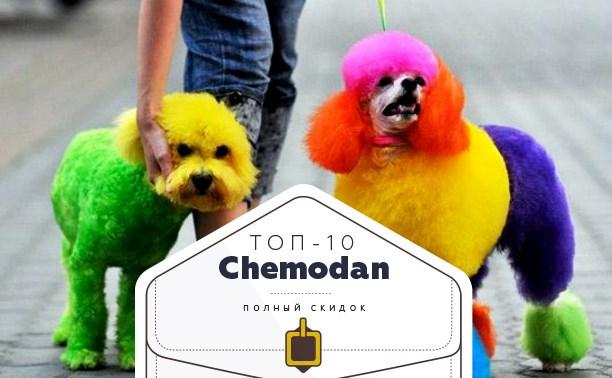 Топ-10 от «Чемодан»: собачьи стрижки, пейнтбол и соляная пещера