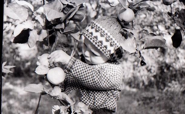 Плодово-ягодное детство