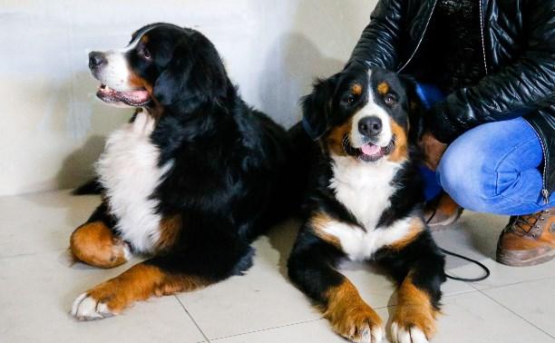 Бернский зенненхунд, корги и басенджи: в Туле прошла выставка собак