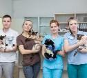 Ветеринары клиники Vetera: все о кормлении и стерилизации домашних животных