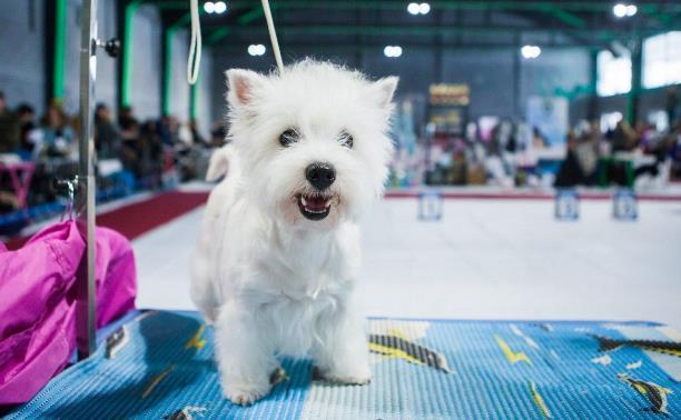Тульские ветеринарные клиники и зоомагазины: обзор Myslo