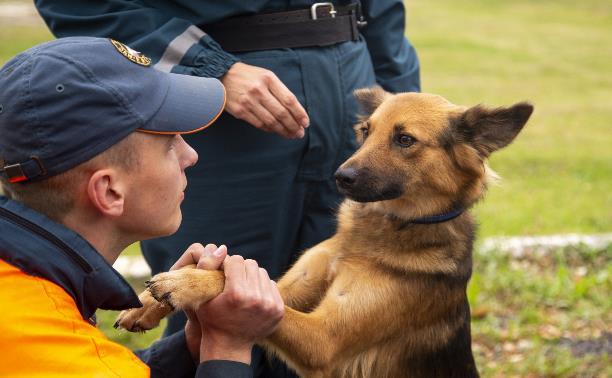 Кинологи МЧС: о собачьем счастье, секретах воспитания и взрывчатке