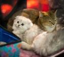 Выставка «Пряничные кошки»: сфинксы, бенгалы и сибирские красотки