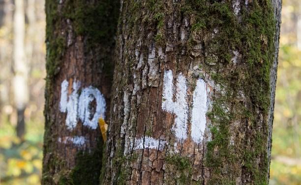 Странные цифры на деревьях в лесу: Кто и зачем их рисует?