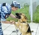 Тульские кинологи: Человека можно обмануть, собаку – никогда!
