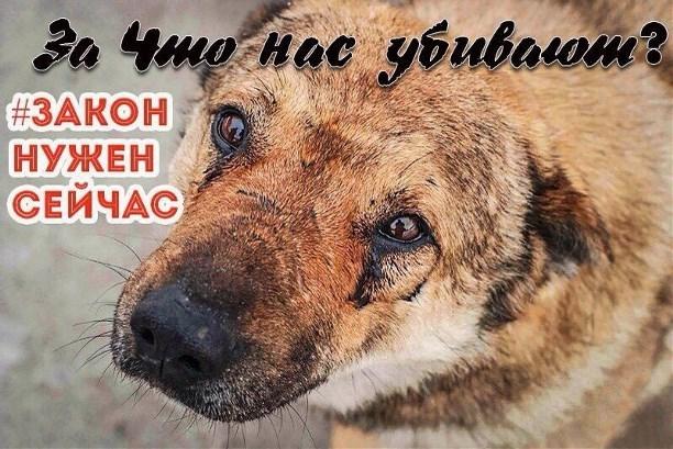 Власти Нижнего Новгорода согласовали митинг запринятие закона озащите животных
