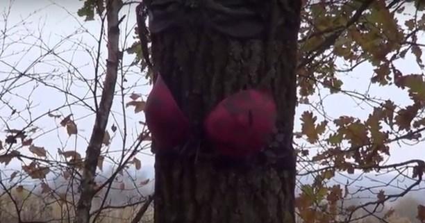 ВТульской области найдена  аллея сдеревьями влифчиках