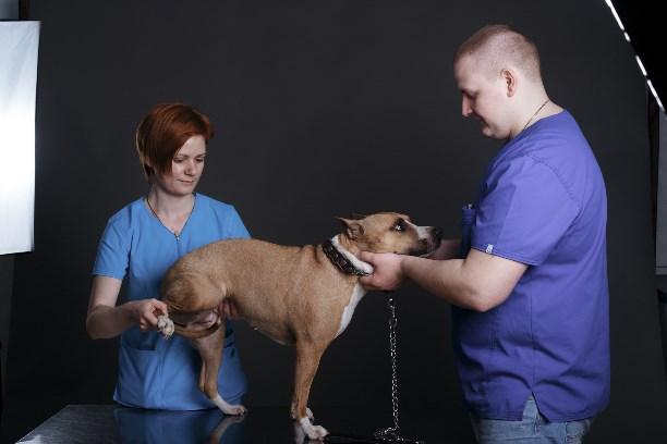 Показатели по общему анализу крови у собак