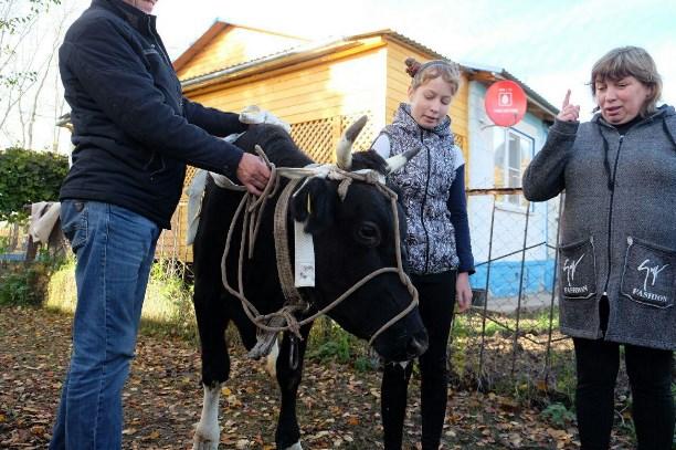 Дмитрий Миляев сообщил корову нуждающейся семье изТепло-Огаревского района