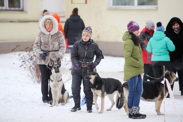На «Пермской ярмарке» проходит международная выставка собак «Огни Прикамья-2018»