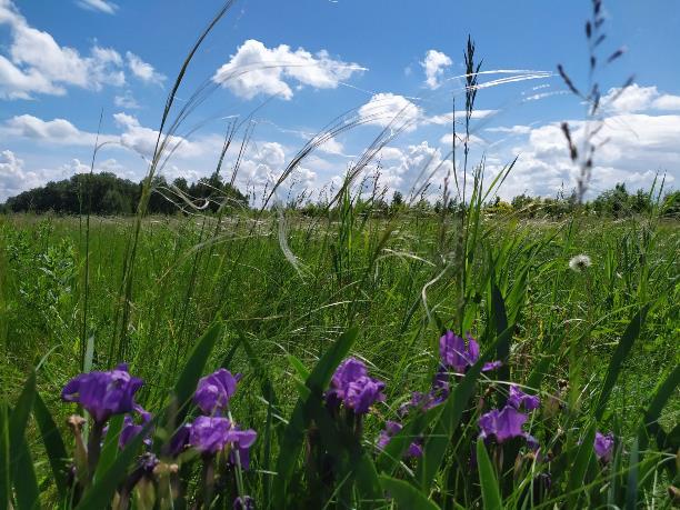 На Куликовом поле цветет ковыль