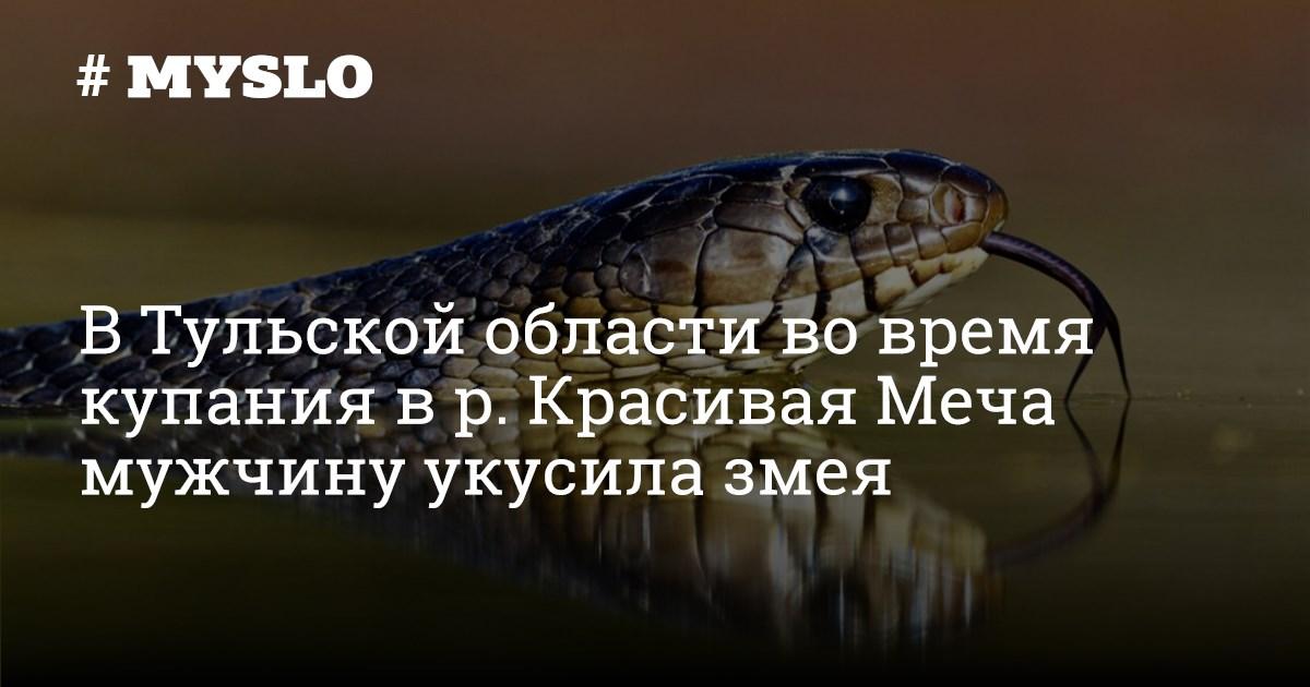 Змея фото красивая