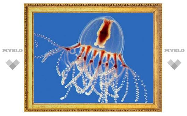 Медузы подтвердили общее происхождение глаз у животных