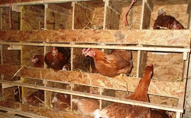 Мужчина украл у соседа двух куриц и петуха