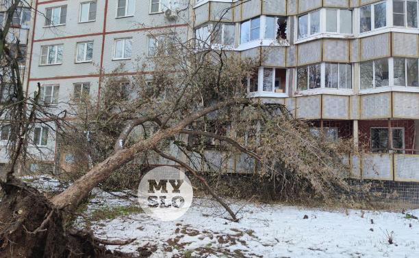 В Туле упавшее на девятиэтажку дерево повредило несколько лоджий