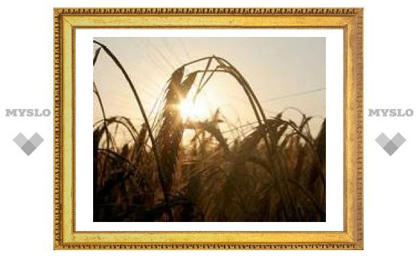 18 июня: Теплая погода - крупное зерно