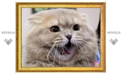 Тулякам показали самых красивых кошек