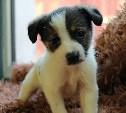 22 декабря в тульском приюте для собак пройдет день открытых дверей