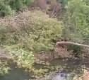 Туляки жалуются на вырубку деревьев на реке Бежка