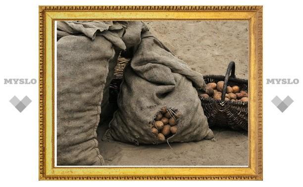 Два года колонии получил житель Тульской области за кражу мешка картошки