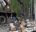 Частников, вырубивших 29 деревьев в берёзовой роще, оштрафовали
