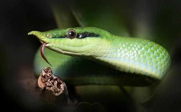 В Туле пройдет змеиный фестиваль