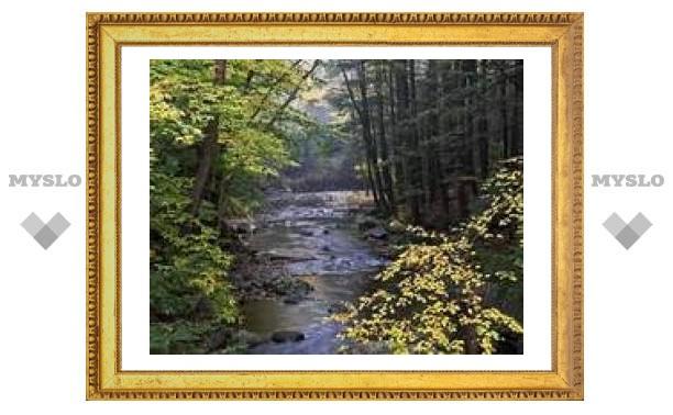 Штат Вермонт признан самым зеленым в США
