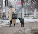 Депутаты Тульской гордумы внесли изменения в правила благоустройства