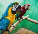 Выставка «Ручные и говорящие»: яркие ара, говорливые какаду и благородные попугаи
