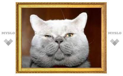 В Туле пройдет международная выставка кошек