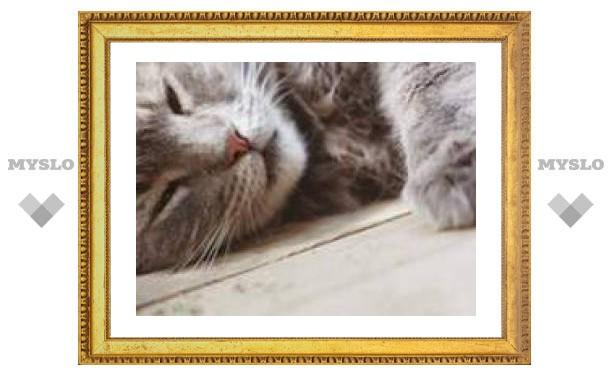 С аллергией на кошек помогут справиться сами кошки