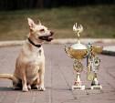 Тульская область примет Всероссийскую выставку собак