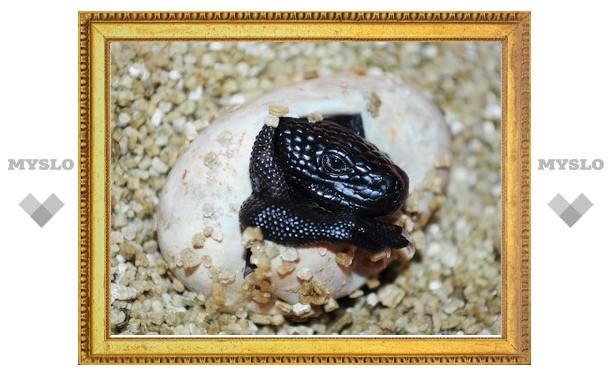 В Туле впервые получено потомство от ядозубов эскорпионов