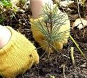 Тульский регион стал активным участником акции «Всероссийский День посадки леса»
