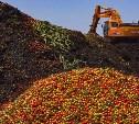 Роспотребнадзор предложил запретить уничтожать съедобные продукты