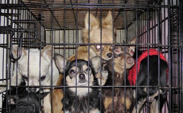 Калужская полиция просит опознать похищенных собак